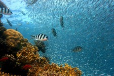 Clima: a Parigi il One Planet Summit sulla biodiversità